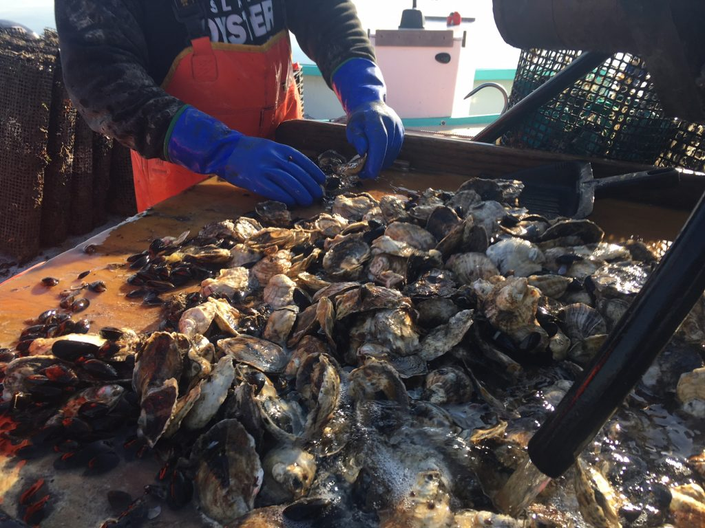 Jamestown Oyster Co  -