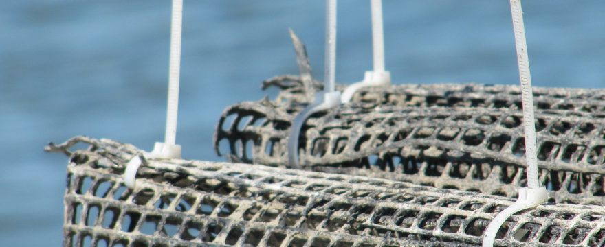 Ways to promote sustainable aquaculture