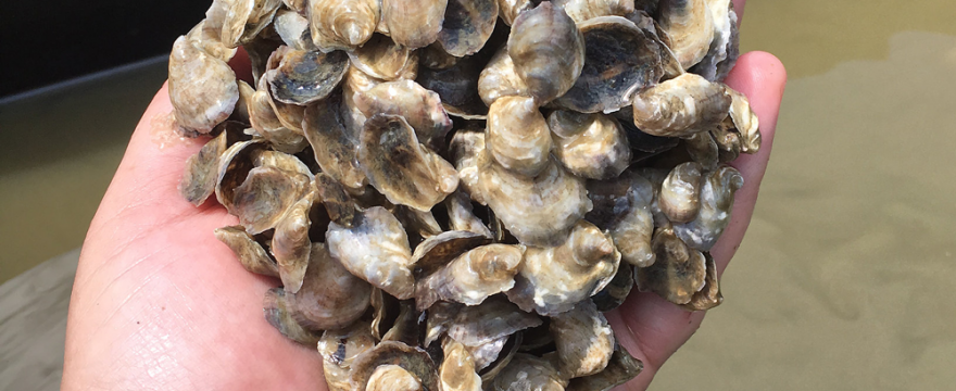 Wickford Oyster Co.